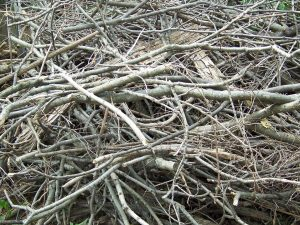 branches pile