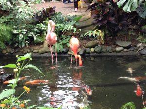 Flamingos and Koi
