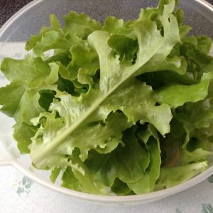 Growing Lettuce At Home: Easily Learn How In A Few Simple Steps