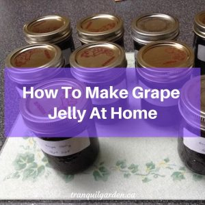 How To Make Grape Jelly At Home