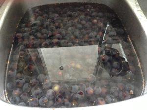 Grapes having a bath