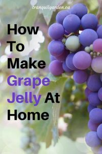 How To Make Grape Jelly At Home - Learn the easy steps how to make low sugar homemade Concord  grape jelly with no pectin from juice you make.