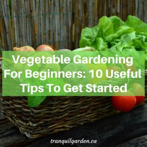 Vegetable Gardening For Beginners: 10 Useful Tips To Get Started
