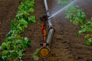 water-sprinklers