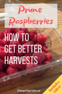 red raspberries in clamshell container with overlay text