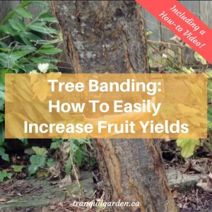 Tree Banding: How To Easily Increase Fruit Yields [+ Video]