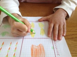 drawing the green husks on the corn on graph paper