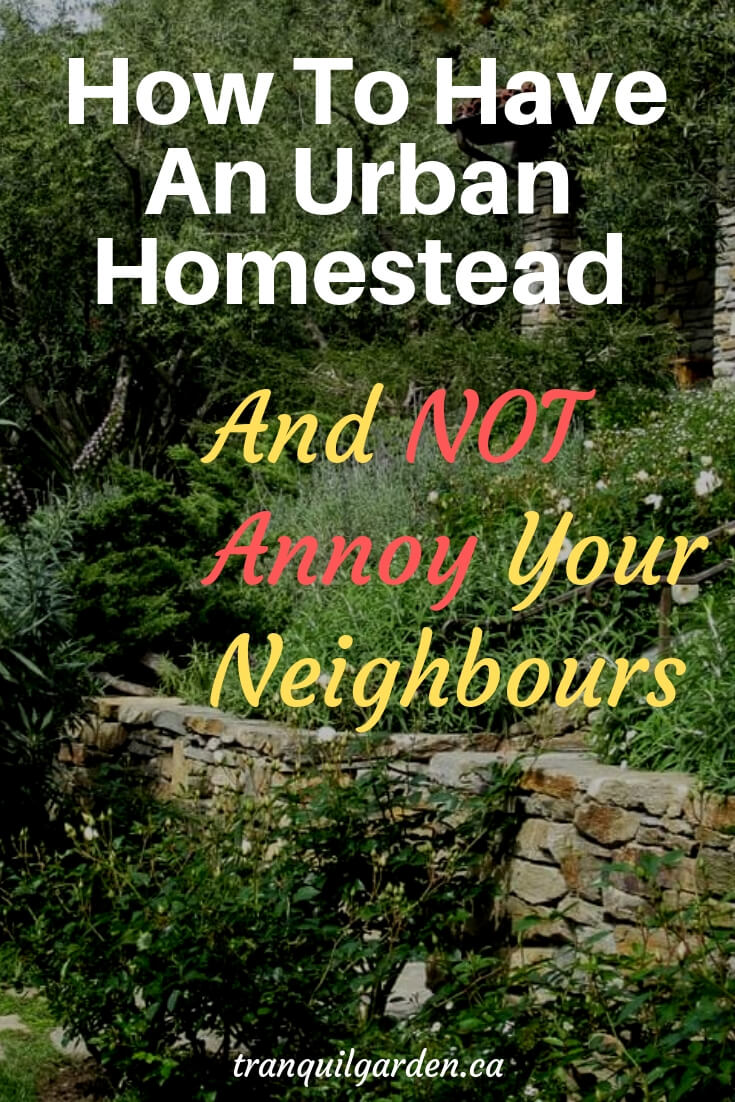Having an urban homestead doesn't give you free rein to do whatever you wish. So how do you have an urban homestead and not annoy your neighbours? #homesteading #urbanhomestead #homesteadneighbours