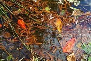 water puddle with leaves