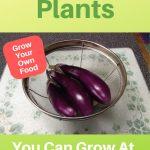 purple eggplant in sieve