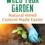 Best Time to Weed Your Garden