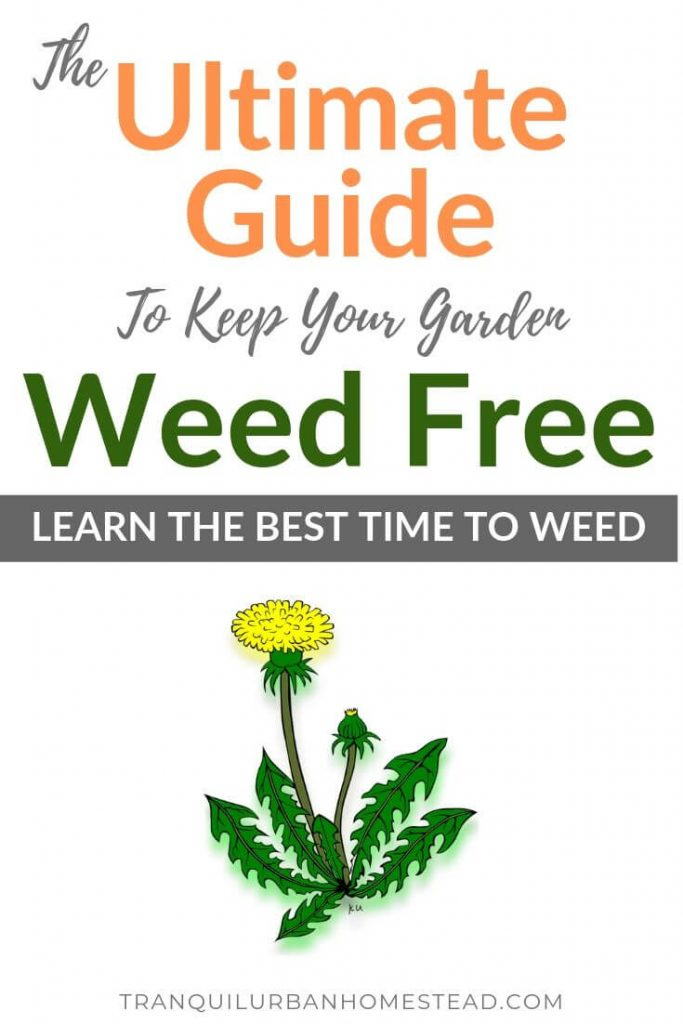 Best Time to Weed