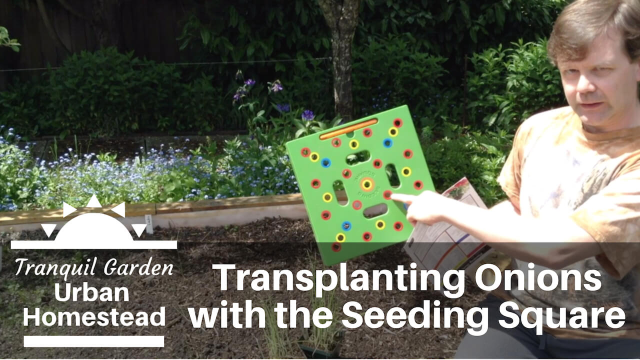 thumbnail for video on Transplanting Onions with the Seeding Square