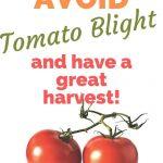 How to Avoid Tomato Blight