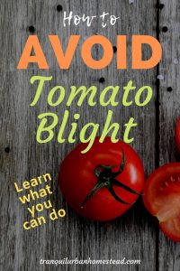 How to Avoid Tomato Blight That Can Decimate Your Crop