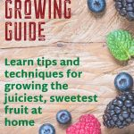 Fruit Growing Guide
