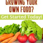 Homegrown Food for Beginners - The First Year