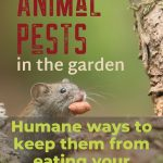 Animal Pests in The Garden
