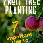 Fruit tree planting tips
