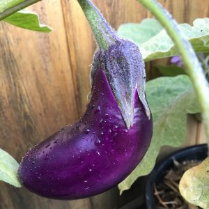How To Still Have A Beautiful Garden While Growing Food