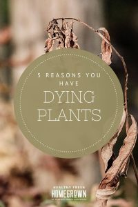 Read more about the article 5 Reasons Why Your Plants Are Dying