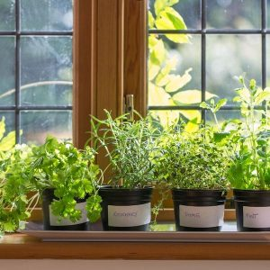 5 Perfect Places To Grow An Abundance Of Herbs