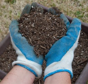 potting soil for containers
